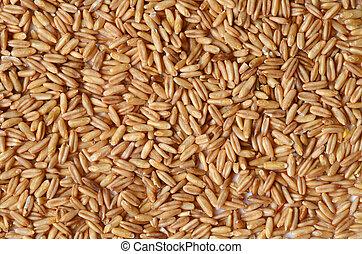 graines, avoine, entier
