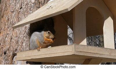 graines, fou, grignoter, birdhouse, écureuil