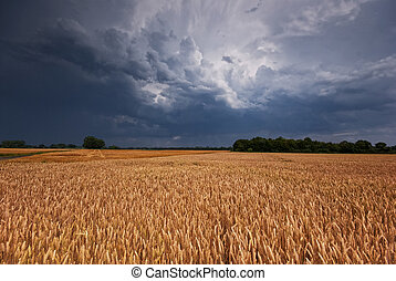Grainfield and storm