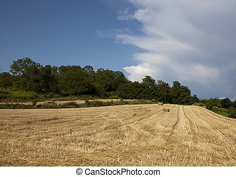 grainfield, ind, den, sommer