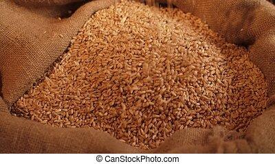grains, blé, verser, sac