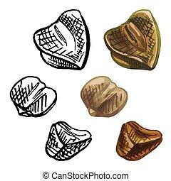 Grains buckwheat. Vector color vintage hand drawn hatching illustration