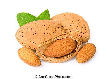 Grains of almonds