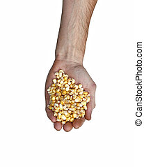 Grains of corn in his hands isolated