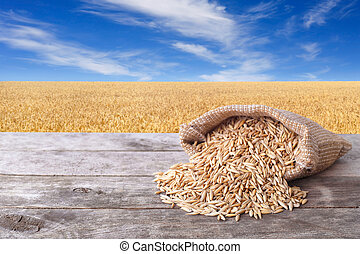 Grains of oat with field