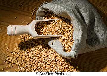 Grains of oats. Yields for crops in agriculture