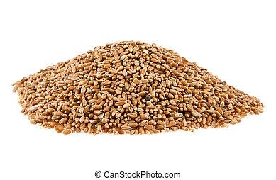 grains of wheat