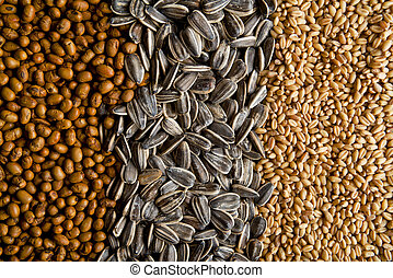 Grains - Various grains sorted on the table. Agricultural...
