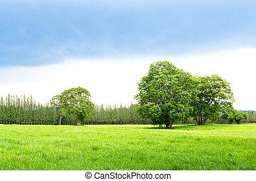 grama campo, paisagem verde