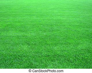 grama campo, verde