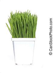 grama trigo