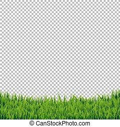 grama verde, borda, isolado