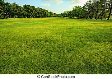 grama verde, campo, de, parque público, em, manhã, luz