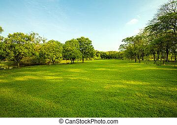 grama verde, campo, em, urbano, parque público