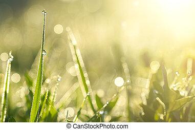 grama verde, com, gotas orvalho, em, luz solar, ligado, um, verão, prado