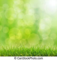 grama verde, e, bokeh, luzes