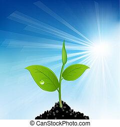 grama verde, e, planta jovem