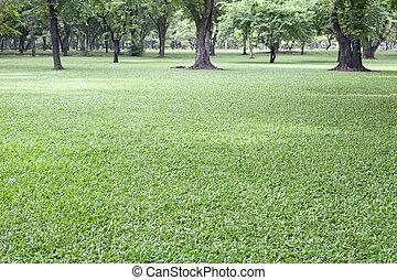 grama verde, em, parque público, uso, como, natural, fundo