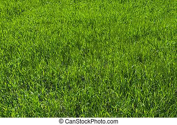 grama verde, ligado, a, gramado, capim, textura