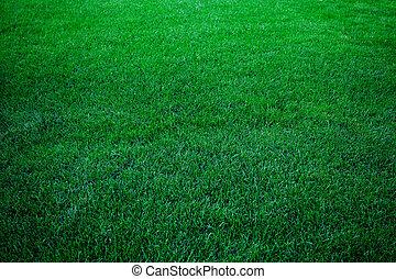 grama verde, luxuriante, fundo