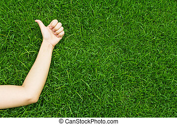 grama verde, luxuriante, mão