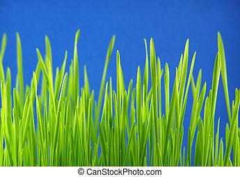 grama verde, palhas
