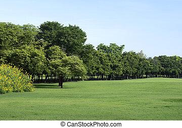 grama verde, parque, árvores