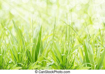 grama verde, refresco, em, sol manhã, luz