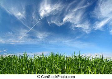 grama verde, sob, céu, com, fleecy, nuvens