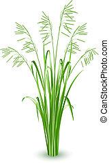 grama verde, vetorial