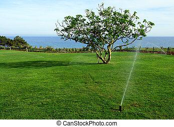 gramado, aguando, sistema irrigação