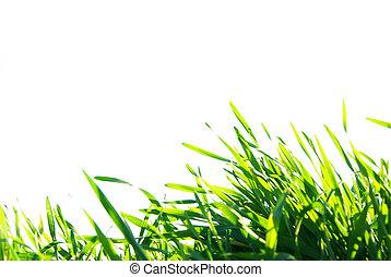 gramado, branca, isolado