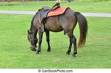 gramado, cavalo pasta