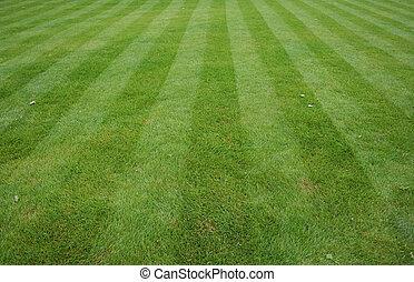 gramado, corte, com, listras