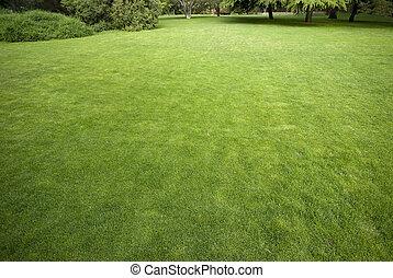 gramado, em, um, jardim botânico, com, um, árvore