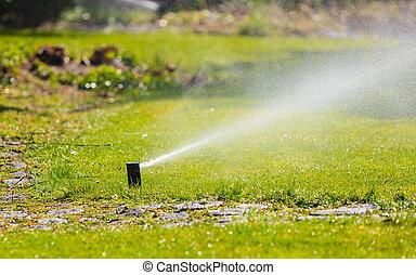 gramado, gardening., irrigador, sobre, água, pulverização, grass.