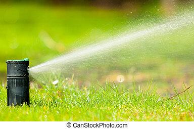 gramado, gardening., irrigador, sobre, água, pulverização,...