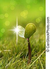 gramado, jardim, seedling, gotas, água, brilhar