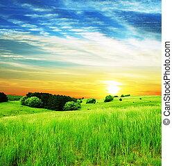 gramado, ligado, pôr do sol