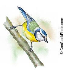 gramado, pássaros, teta azul