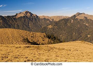 gramado, paisagem montanha, morning., dourado