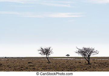 gramado, planície, grande, árvores