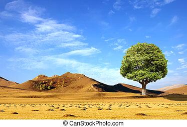 gramado, um, árvore solitária