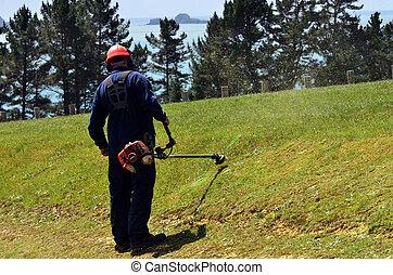 gramado, weedeater, mowing homem