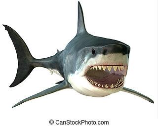 gran boca, blanco, tiburón