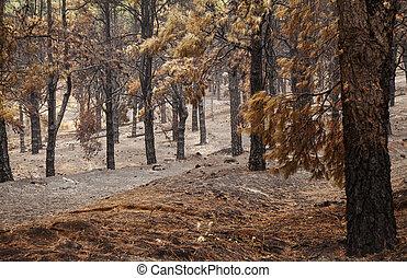 Gran Canaria after forest fire - Gran Canaria, Las Cumbres,...