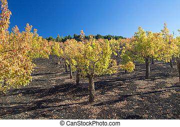 Gran Canaria, autumnal fruit garden in Las Cumbres, highest...