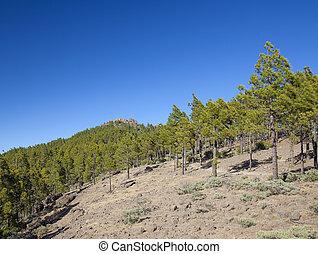 Gran Canaria, June - Gran Canaria, Las Cumbres - the highest...