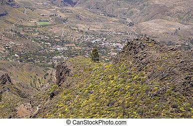 Gran Canaria, June