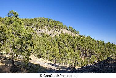 Gran Canaria, the highest areas of the island, Las Cumbres -...